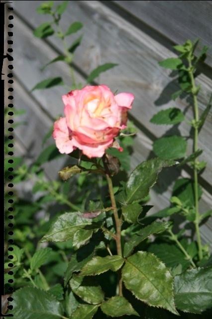 20110615-085114.jpg